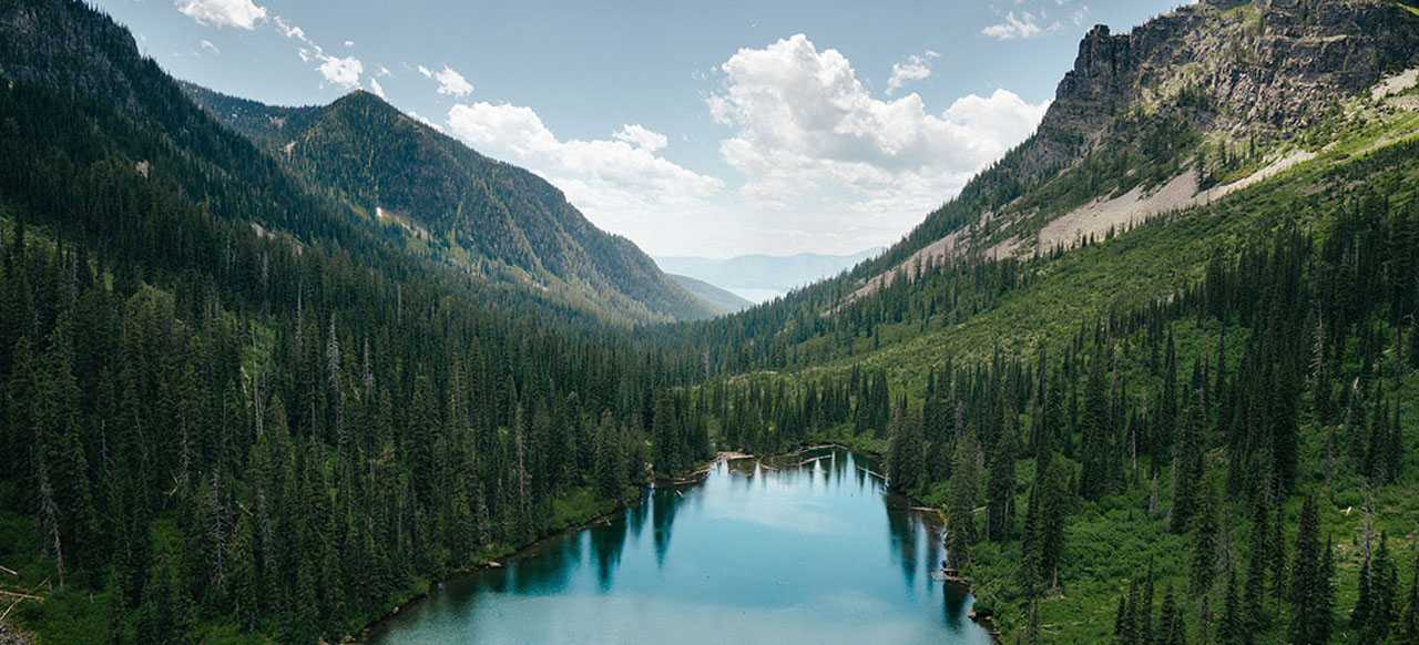Montana Forests: Past, Present & Future
