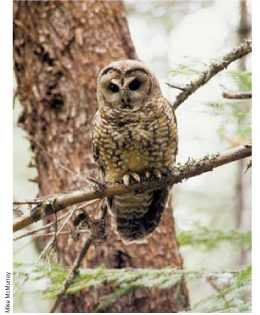 Spotted Owls Revisited: Science vs. Politics