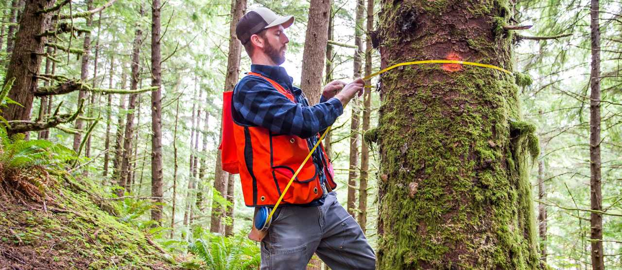 Youth Forestry Programs: Engaging the Next Generation