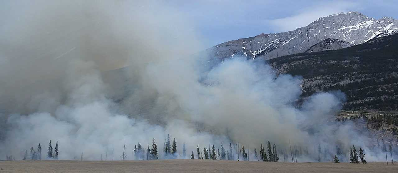 The Silver Fire: Recovery, Restoration and Roundup