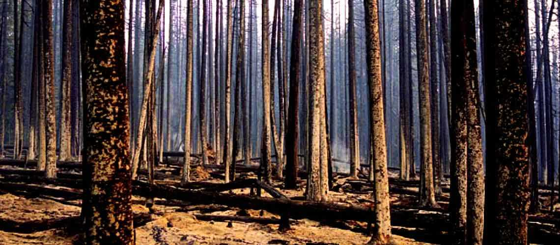 Why Are Our Forests Burning?