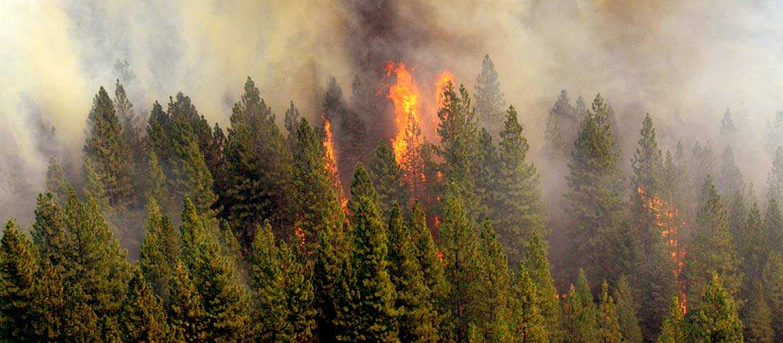 A Taxpayer's Guide To Wildfires: Part 1