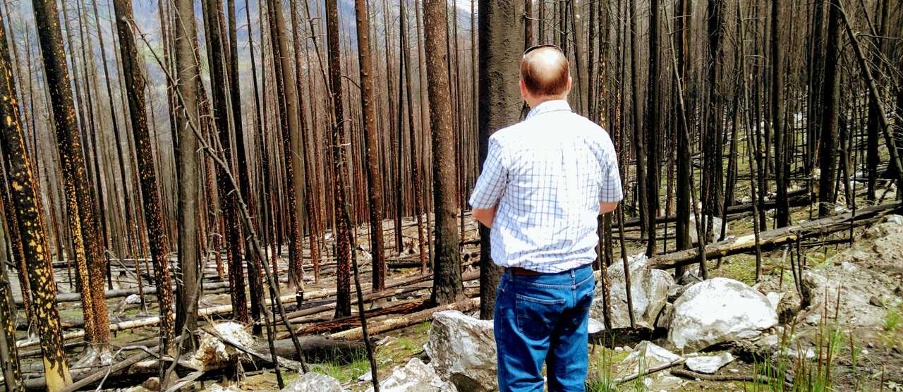 A Sea Change In How Federal Judges View Collaborative Forest Restoration Projects